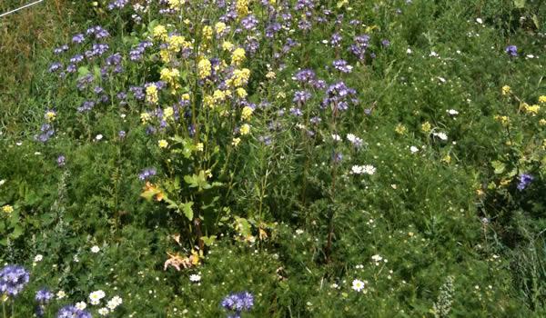 Paardenweide ingezaaid met biologisch graszaad en bloemen/kruiden