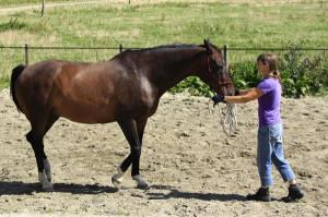 Freestyle lessen: achterwaarts met Mister